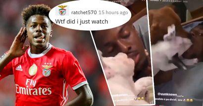 I cani gli leccano la bocca e lui non si oppone: la stella del Benfica condivide le clip su Instagram