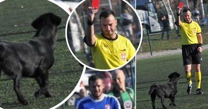 Serbian dog gets a red card for invading the pitch four times, refuses to leave, referee abandons match
